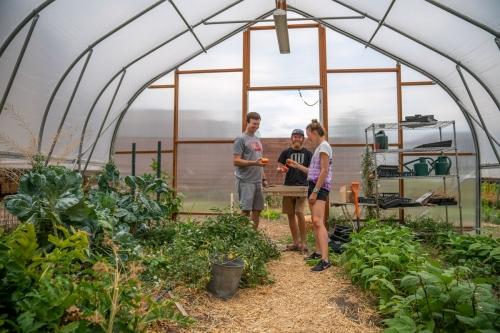 New Greenhouse (2017)