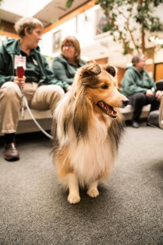 Therapy Dogs-22
