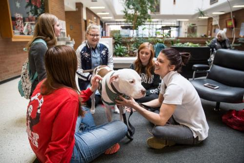 Therapy Dogs-35